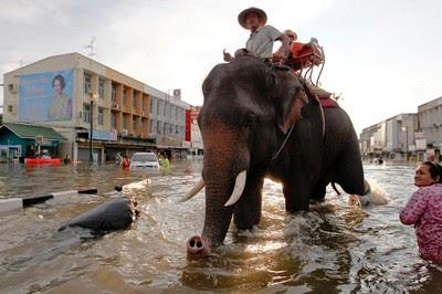 Fotos Fotogalerie, Sturmflut Hochwasser Überschwemmung, Katastrophen, Thailand, Kambodscha, Banyan, Laos, Vietnam, Taifunsaison, 2011, Oktober,