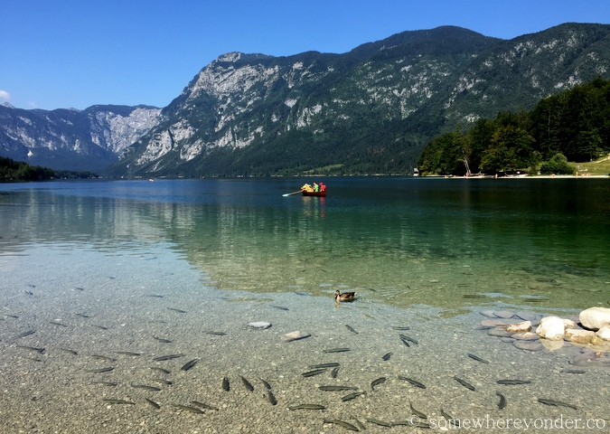 Trout in Lake Bohinj, Slovenia