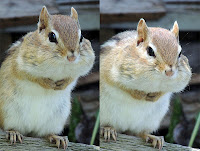 Chipmunk sees what you did there