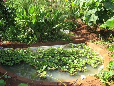 Tecnologias Vivas e Habitat Sustentável