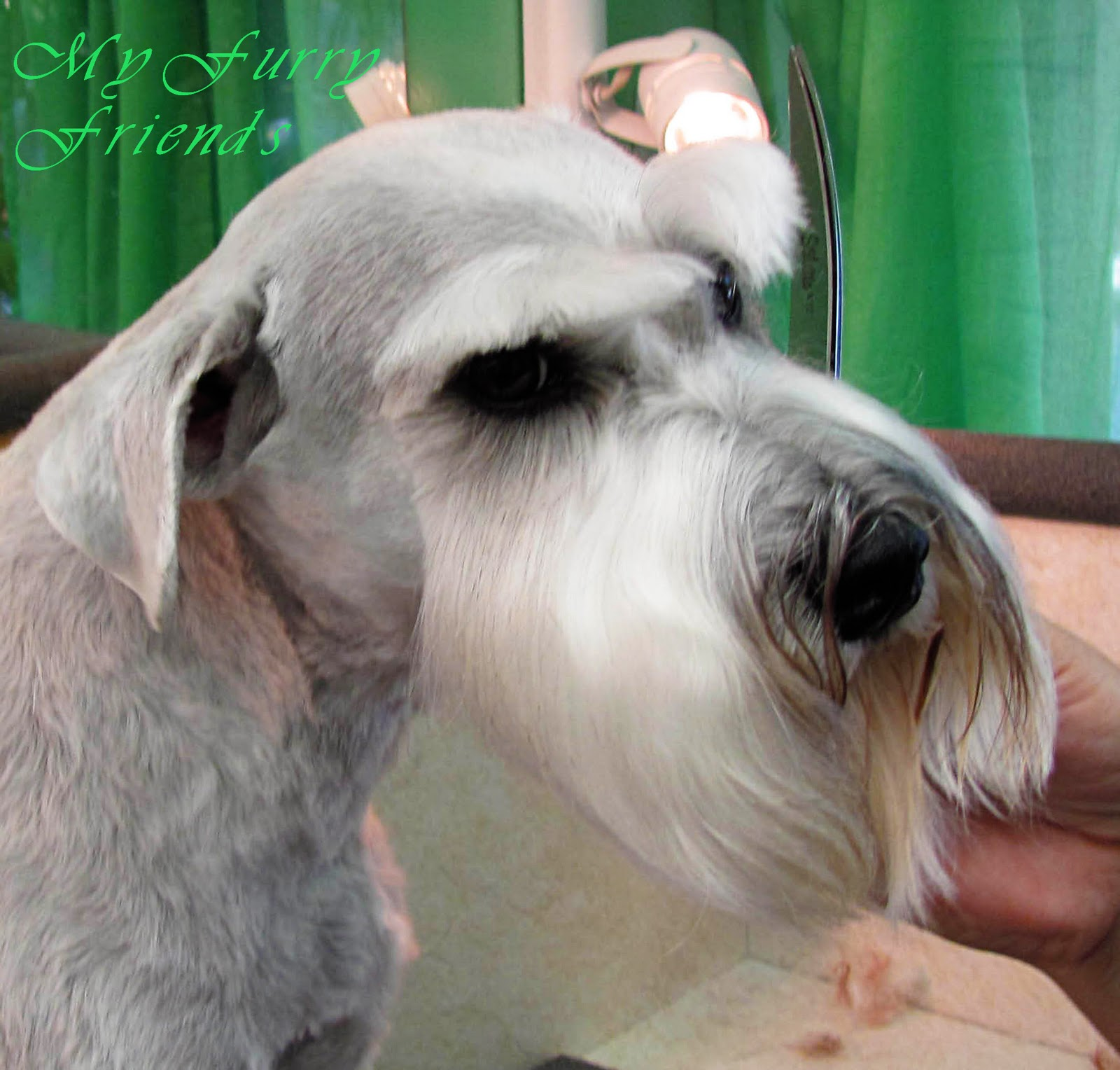 Pet Grooming The Good The Bad The Furry Using Clip Comb