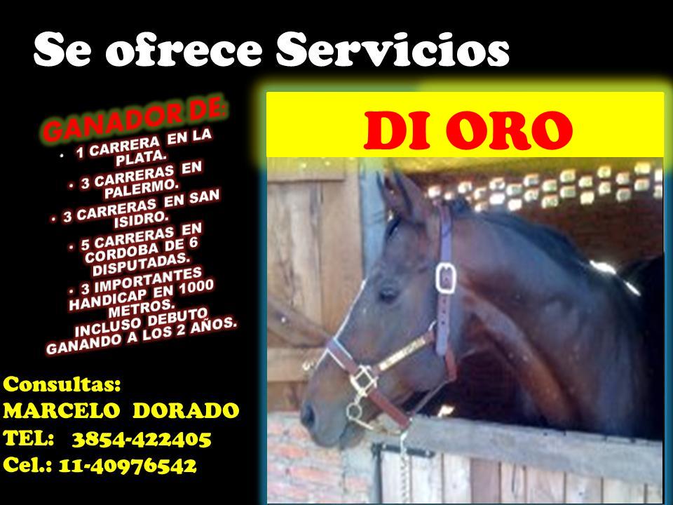di oro - servicios