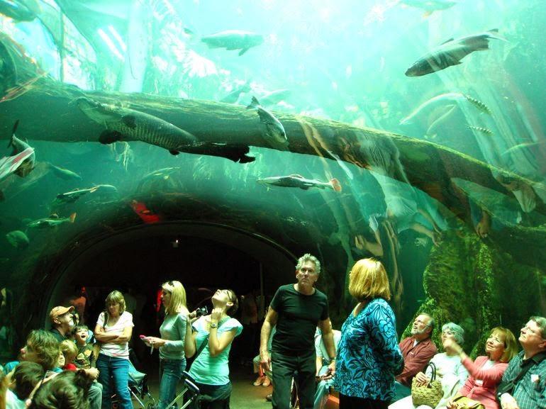 San Francisco Ca Aquarium