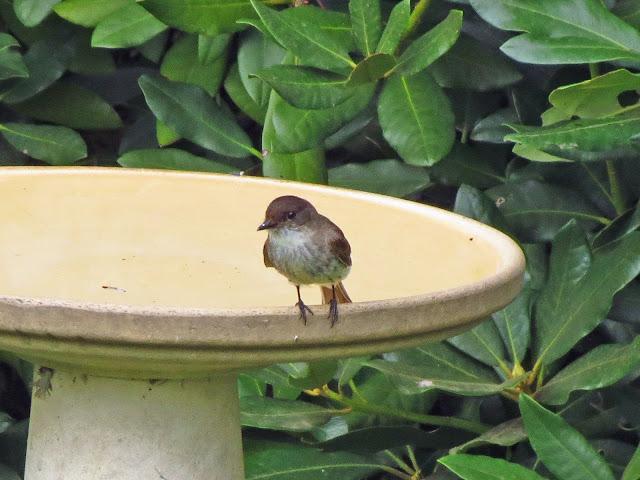 phoebe on edge of bath