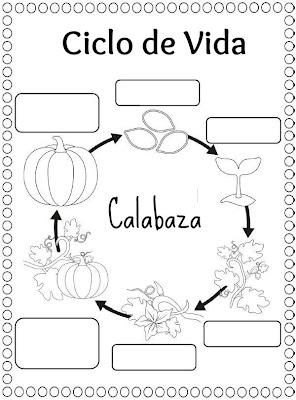 Menta m s chocolate recursos y actividades para for Como crecen los arboles para ninos