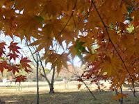 広々とした境内、芝生と紅葉。