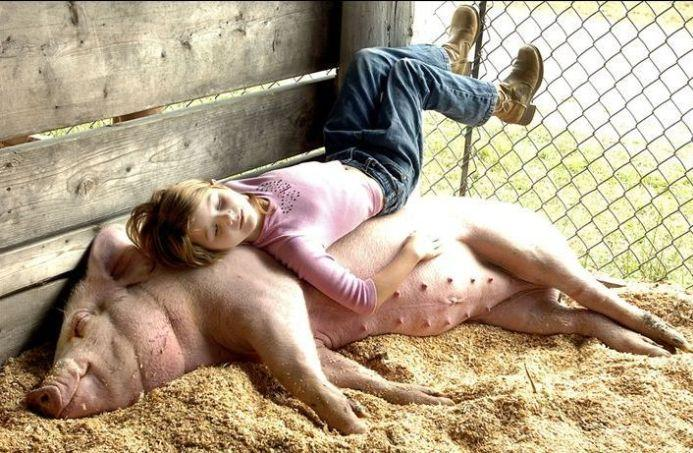 Pig-to-Human Transplants Are Closer Than Ever ...