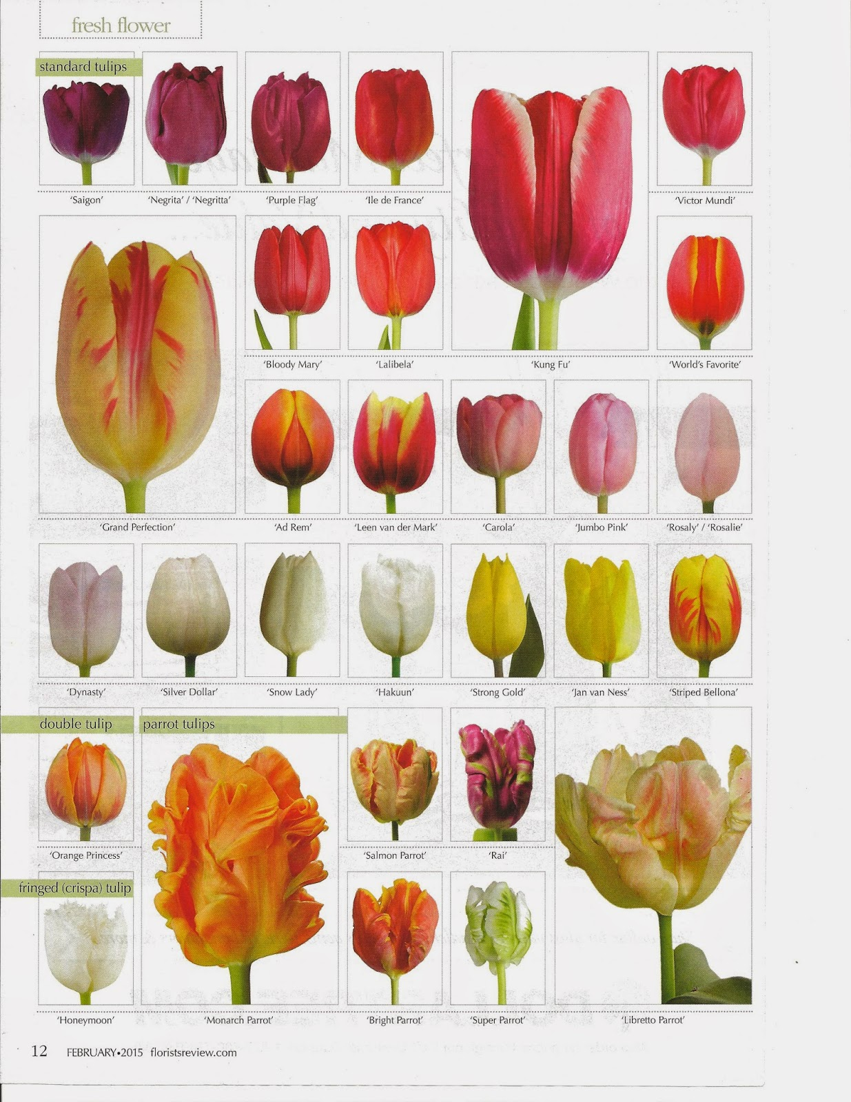 Tulip colors list fiori idea immagine flower classroom tulipss review magazine features this geenschuldenfo Gallery