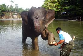 Elephant Training center