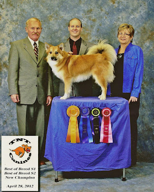 Fox Meadow Thorra Kari earns his UKC-CH