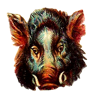 pig boar animal digital image