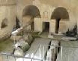 22 subterranean olive oil plants