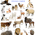 Names of Animals and Young Ones