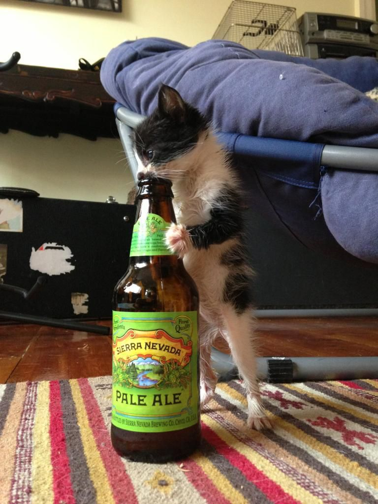 cat beer bottle animal - photo #14