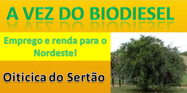 OITICICA DO SERTÃO
