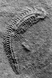 Inyo County Represented Fossils - Google Images