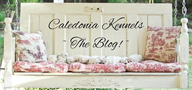Caledonia Kennels