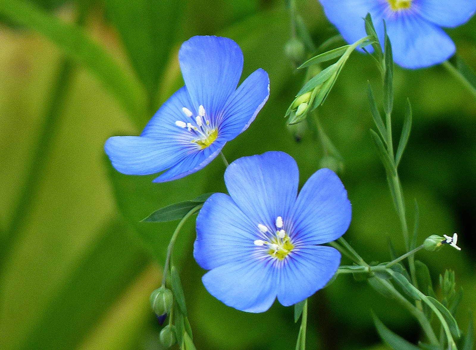 Herbal Plants March 2015