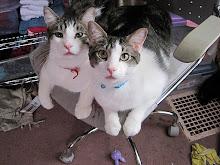 Charlie & Basil