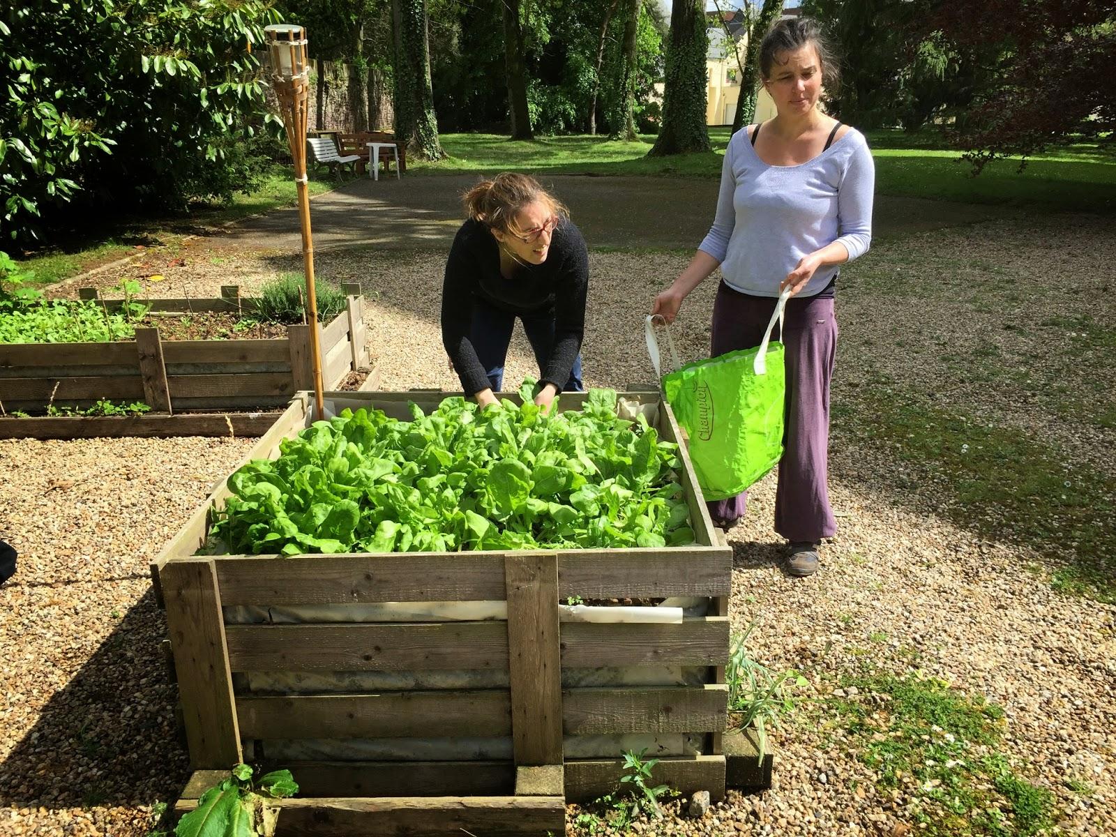 Le blog du jardin partag du 62 rue papu hey ho hey ho for Le jardin d alphonse