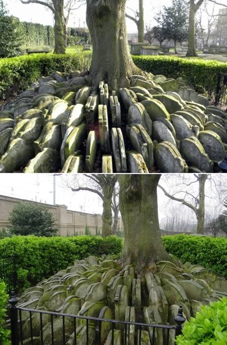 Nisan-Nisan di Pohon