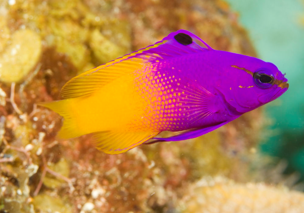top 5 starter marine fish