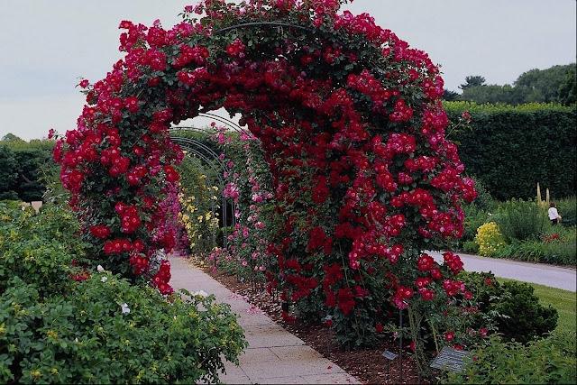 நான் பார்த்து ரசித்த புகைப்படங்கள் சில.... Beautiful+Flower+Garden+Wallpapers+%252811%2529
