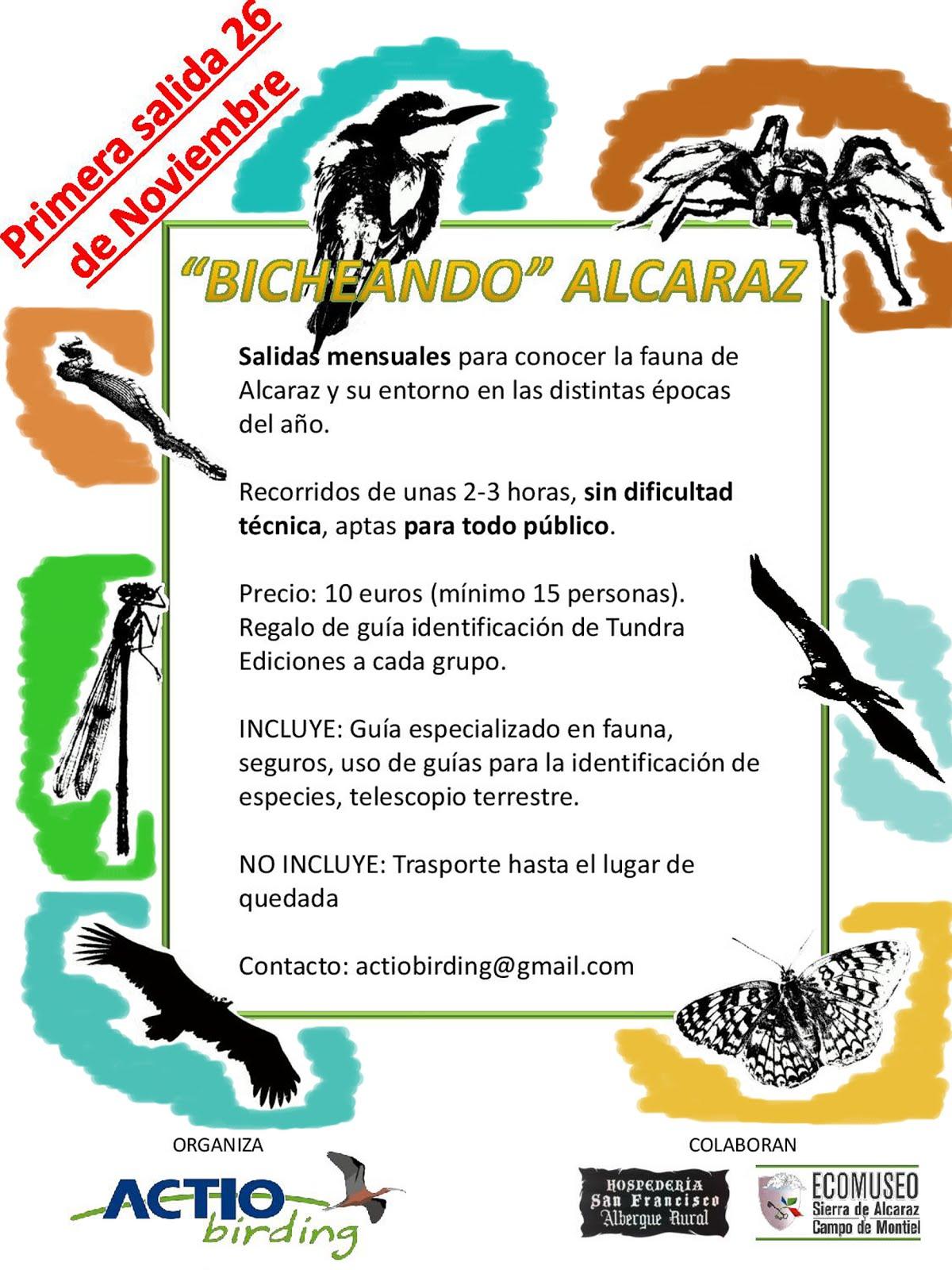 Bicheando Alcaraz