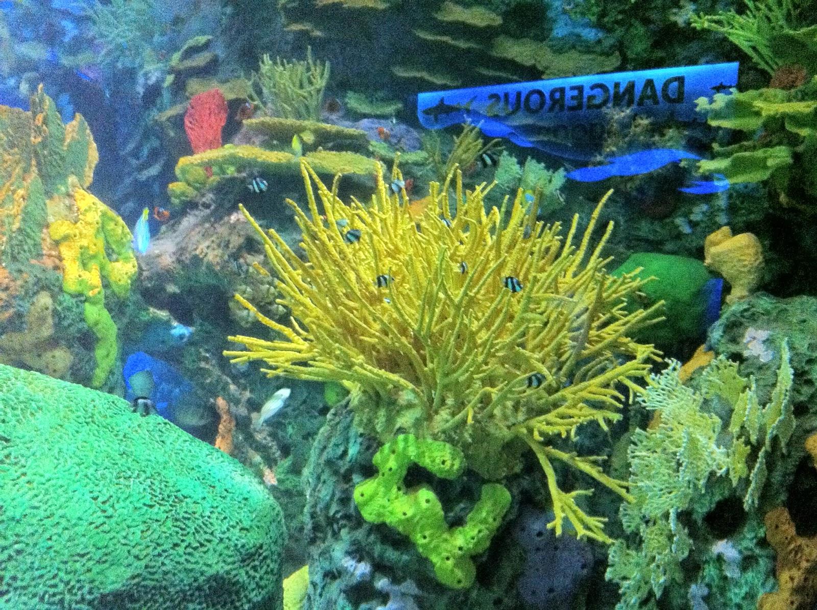 toronto, toronto artist, aquarium, ripley's aquarium, malinda prudhomme, art, fish