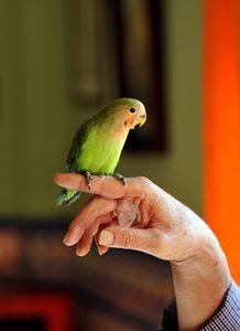 Las Jaulas de los pájaros