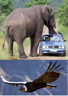 EL ANIMAL MAS GRANDE DEL MUNDO