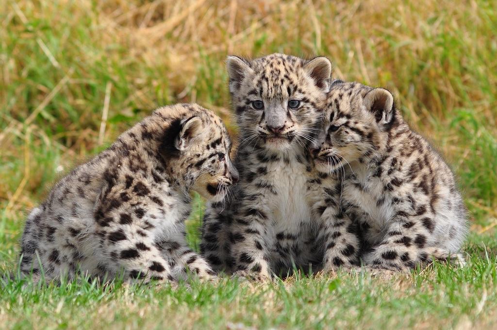 imagenes de animales salvaje - 50 Maravillosas Imágenes Que Capturan Momentos