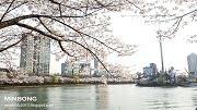 รีวิว พาเที่ยวเทศกาลซากุระที่ทะเลสาบซอกชน