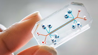 Human 'Lung-On-a-Chip'