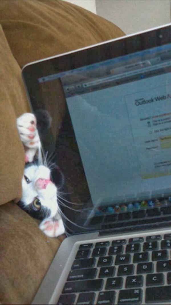 Funny cats - part 85 (40 pics + 10 gifs), cat vs laptop