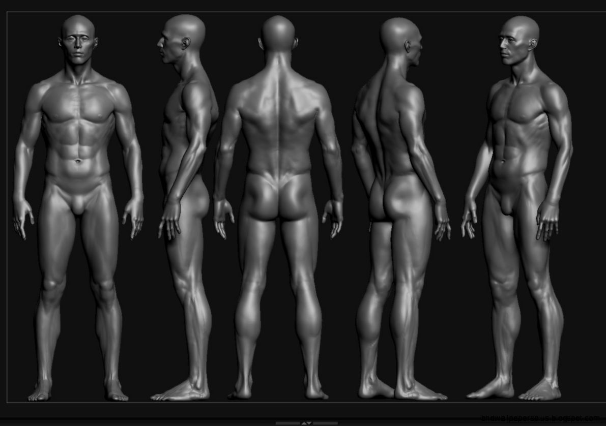 Male Anatomy Study  UArtsy