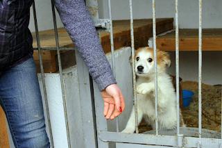 Львівщина. Перший в Україні Центр всиновлення безпритульних тварин