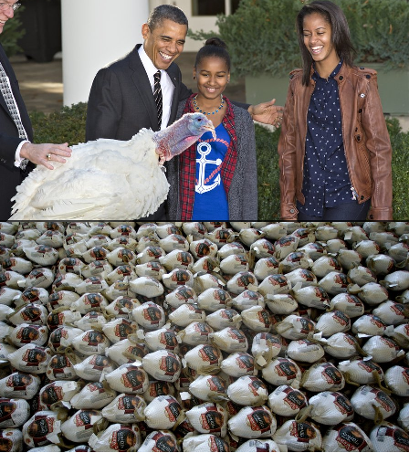 What's Happening on Thanksgiving Day in New Jersey New York Philadelphia California Florida Ohio