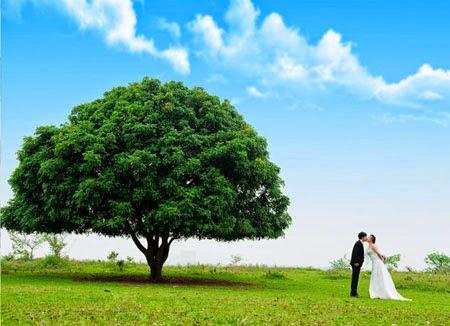 Địa điểm chụp ảnh cưới đẹp ở Hà Nội: Vườn nhãn Gia Lâm
