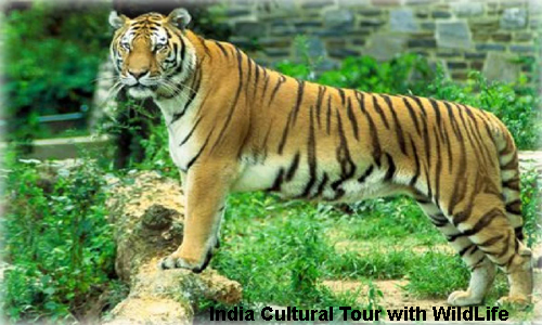 Tour of India - Luxury Cultural Tour with WildLife