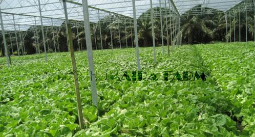Galery Humaira Farm