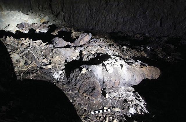Dog Mummies