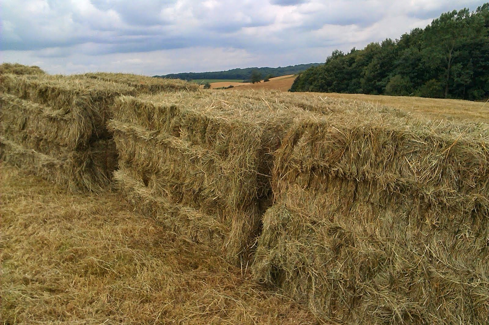 'No Spray/No Fert'  Meadow Hay for Sale