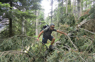 Several fallen trees on the trail created extra challenge
