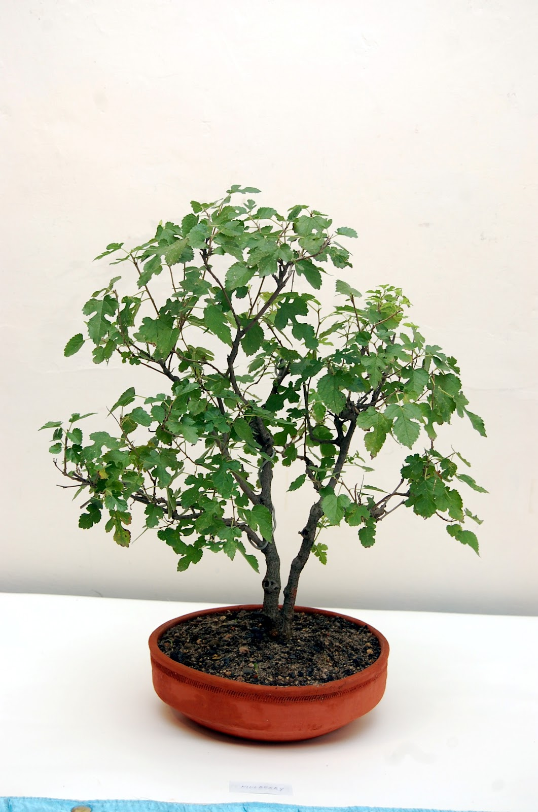 The Art And Science Of Bonsai