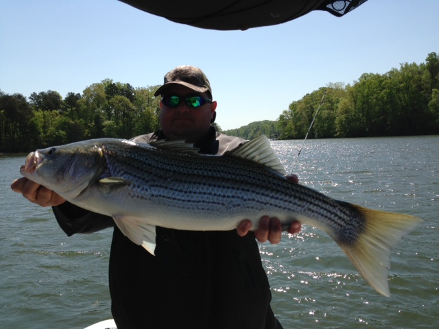 Ga angling lake lanier striper may 3 2013 for Lake lanier fishing spots