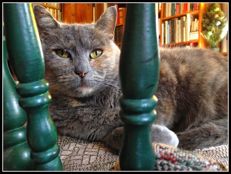 Nova Scotia; Cat