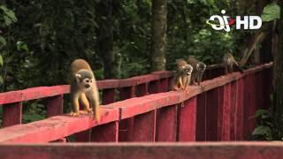 isla de los micos - amazonas
