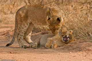 21. Please Stop, You're Killing Me!!! by Ashley Vincent