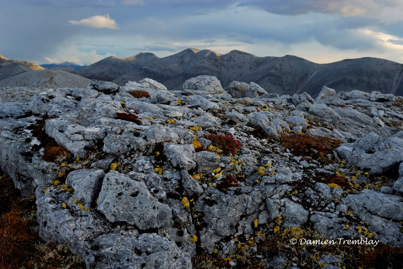 """Lichens"", Ogilvie Mountains"